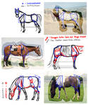 Horse legs and how the shadow will lay
