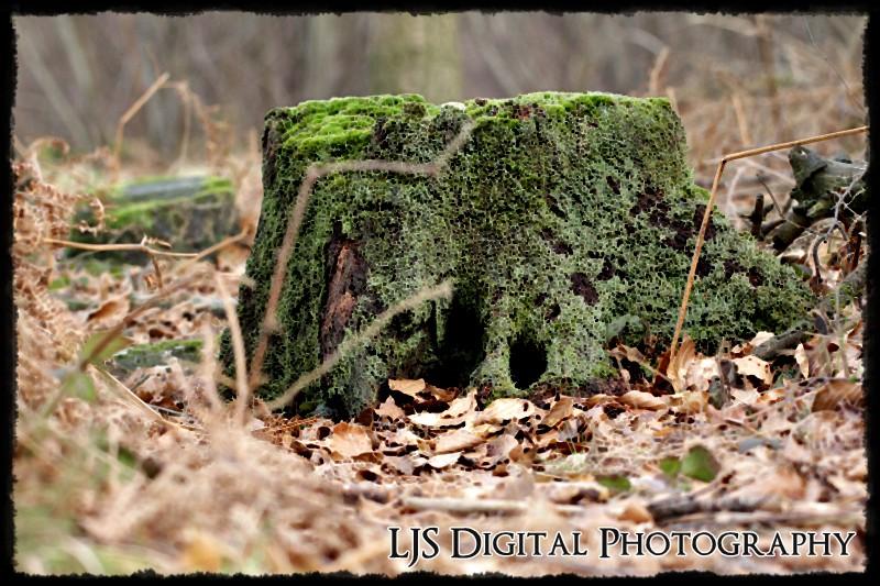 fairy house tree stump by lucicerious