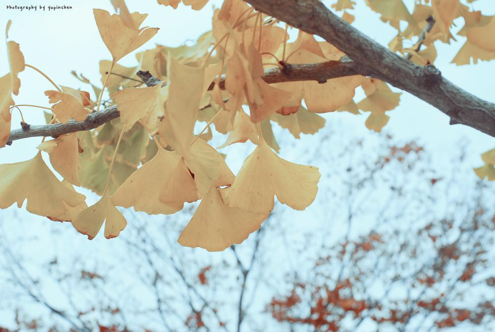 KOREA autumn by reiime