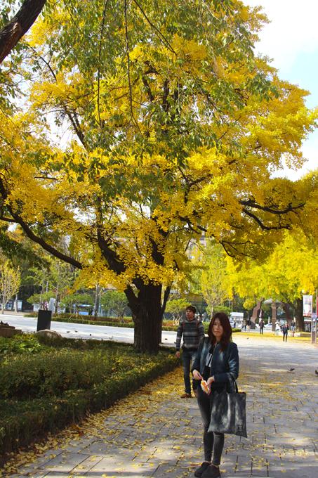 Street YELLOW tree by reiime