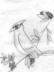 Fierce Cardinal