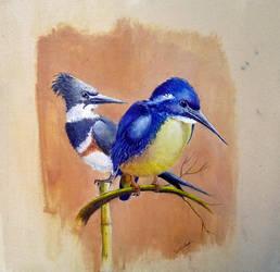 Kingfishers 01