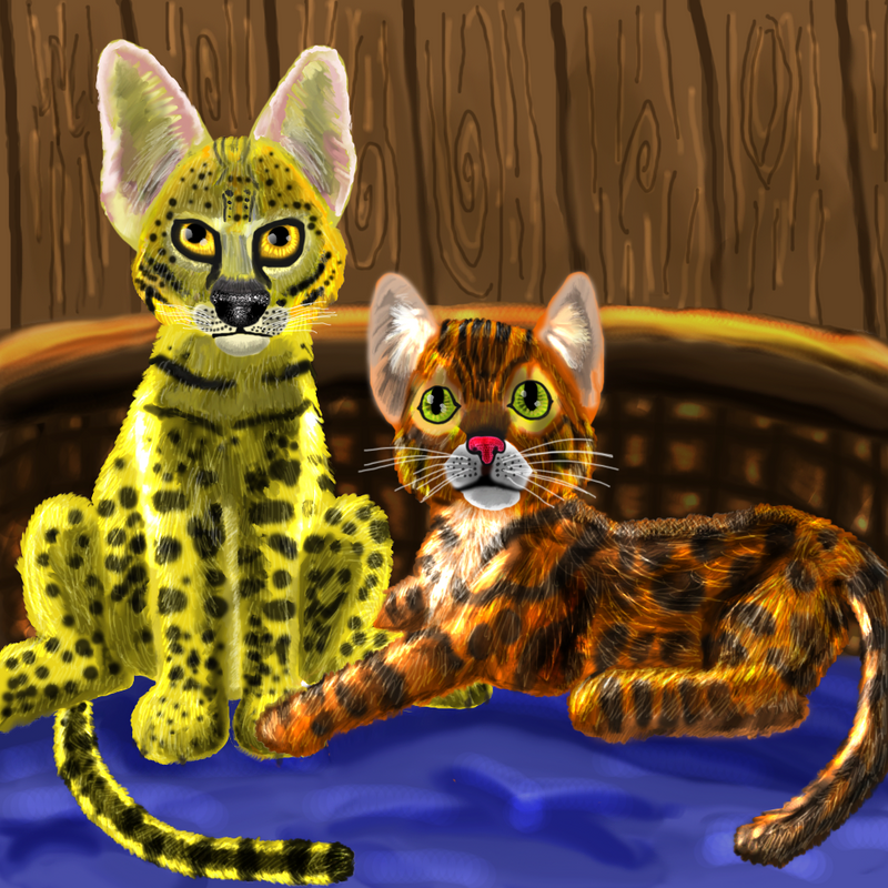 Savannah and Bengal by Disneyfairy