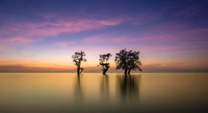 Salt water trees