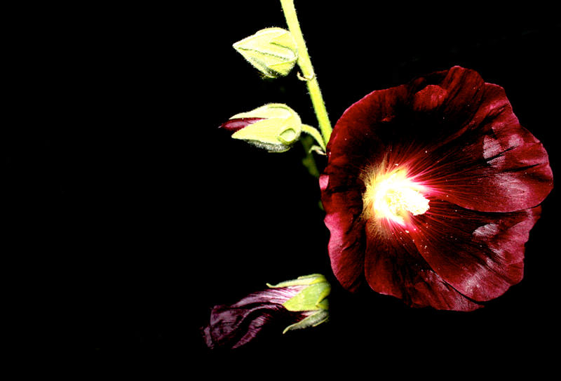 Dark Flower By 01lostandforgotten10 On Deviantart