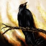 Crow by Drawlight