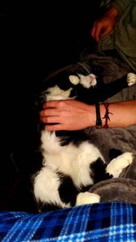 Cats love quartine