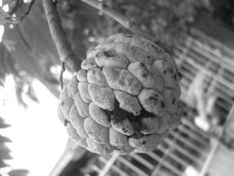 Sugarapple by blackhunter09