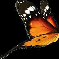butterfly wings by DoloresMinette
