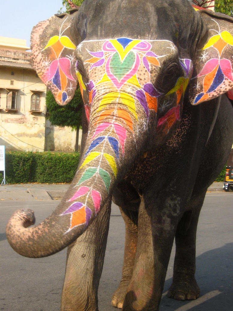 Painted Elephants Photography Painted Elephant by