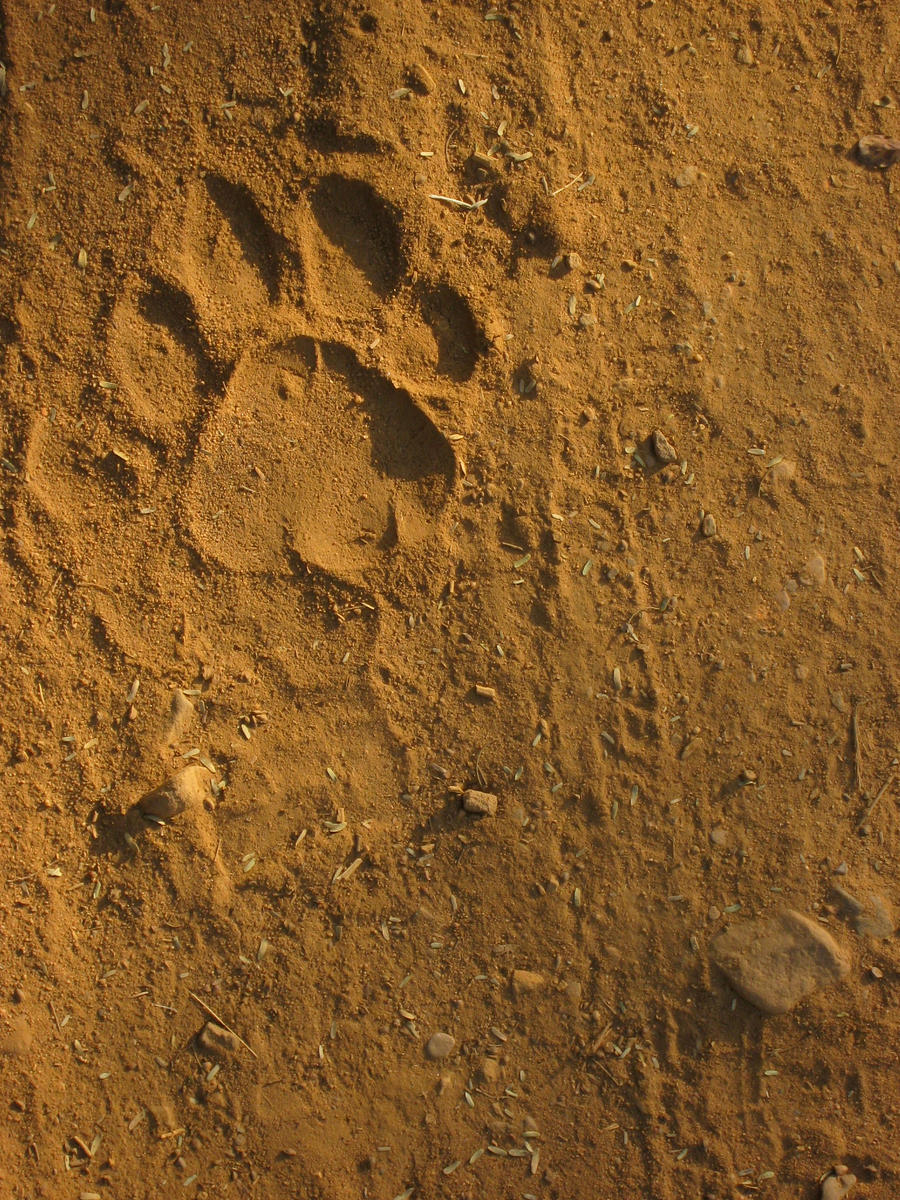 Tiger paw print background - photo#9