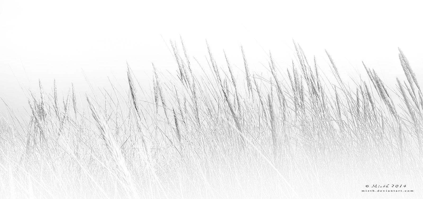 Field of dreams by Mizth