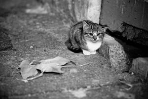 Homeless by matmoon