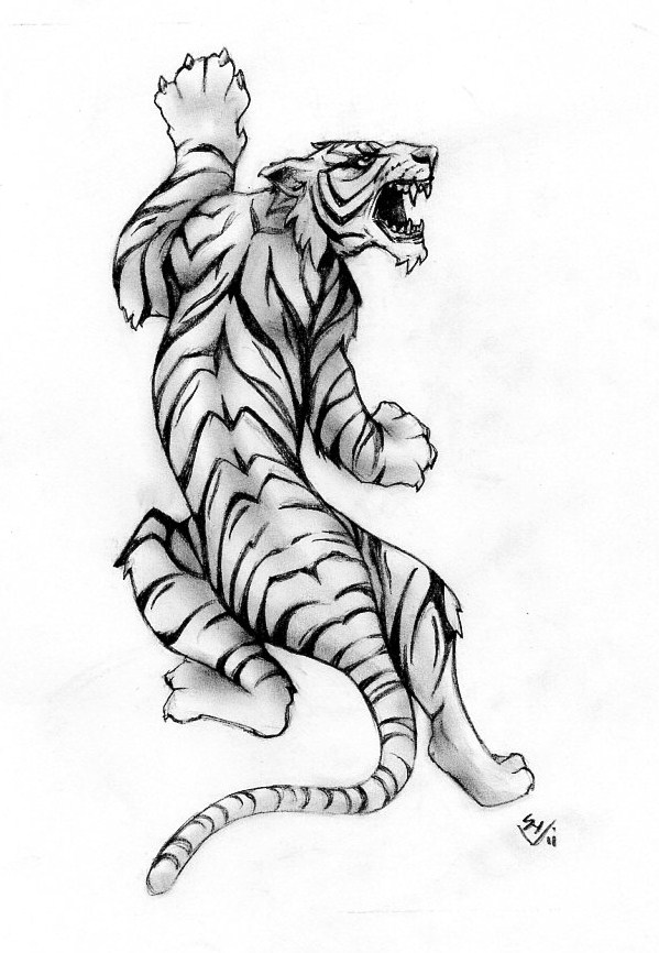 Tiger by Hamdoggz on DeviantArt