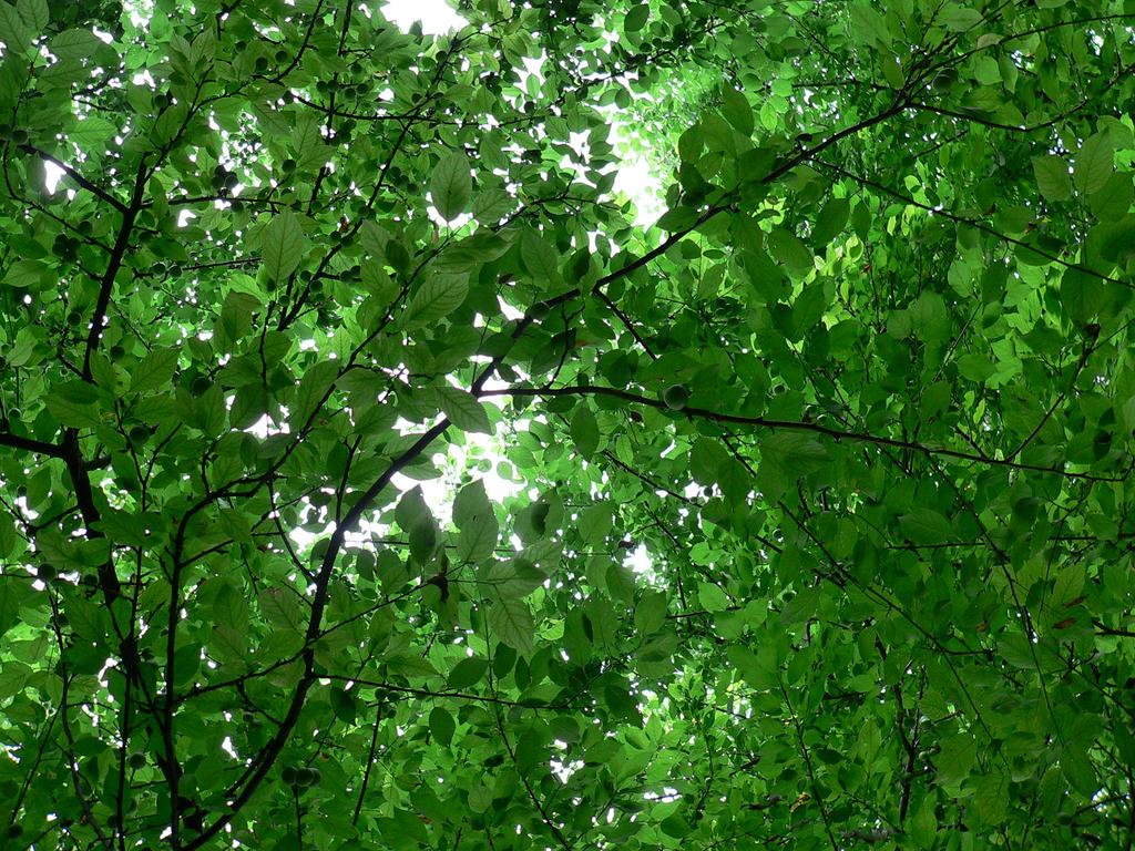 Green 6 by Aslehill12