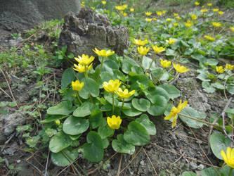 Spring's little wonders