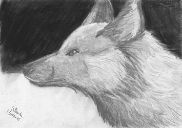 Silver Fox by SulaimanDoodle