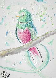 Resplendent quetzal watercolor by SulaimanDoodle