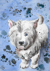 West Highland White Terrier by SulaimanDoodle