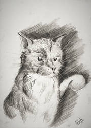 Cat drawing march 2019 by SulaimanDoodle