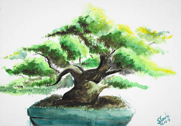 Bonsai watercolor by SulaimanDoodle