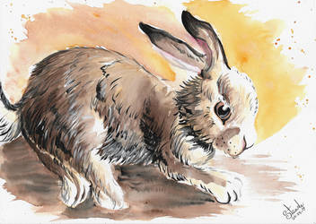 May the 25th rabbit watercolor by SulaimanDoodle