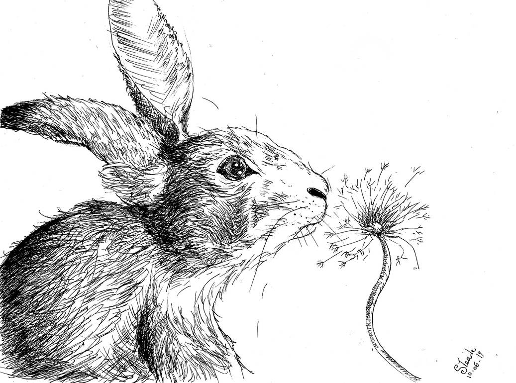 Ink Hare by SulaimanDoodle