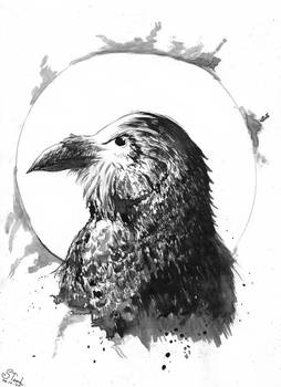 Raven ink drawing 24/09/2020