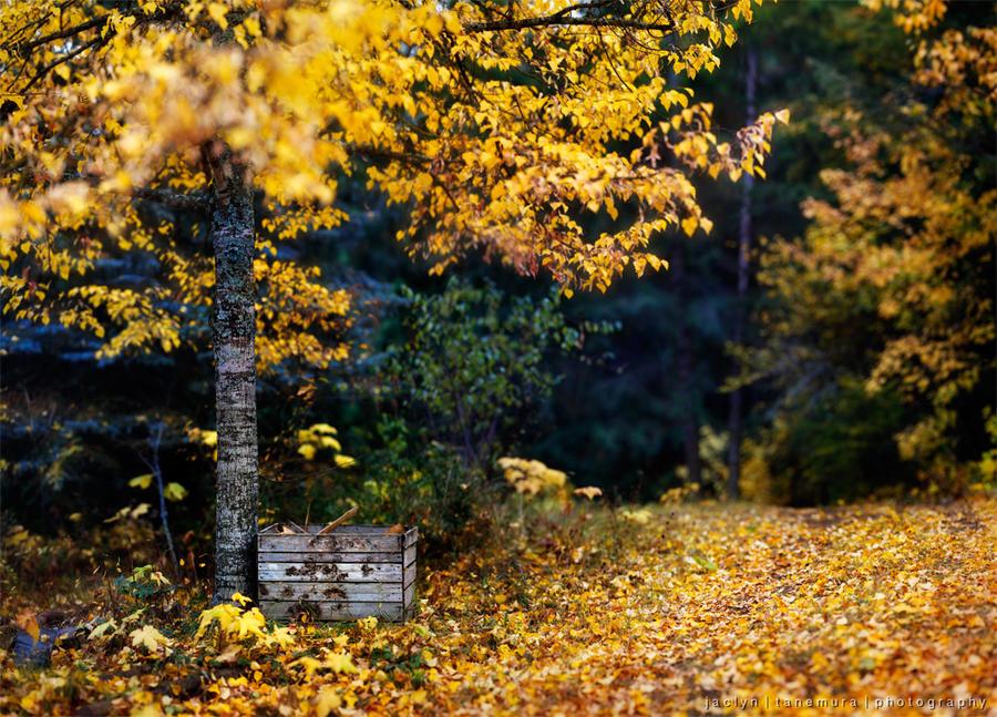 Woodland Treasure Trove by jaelise