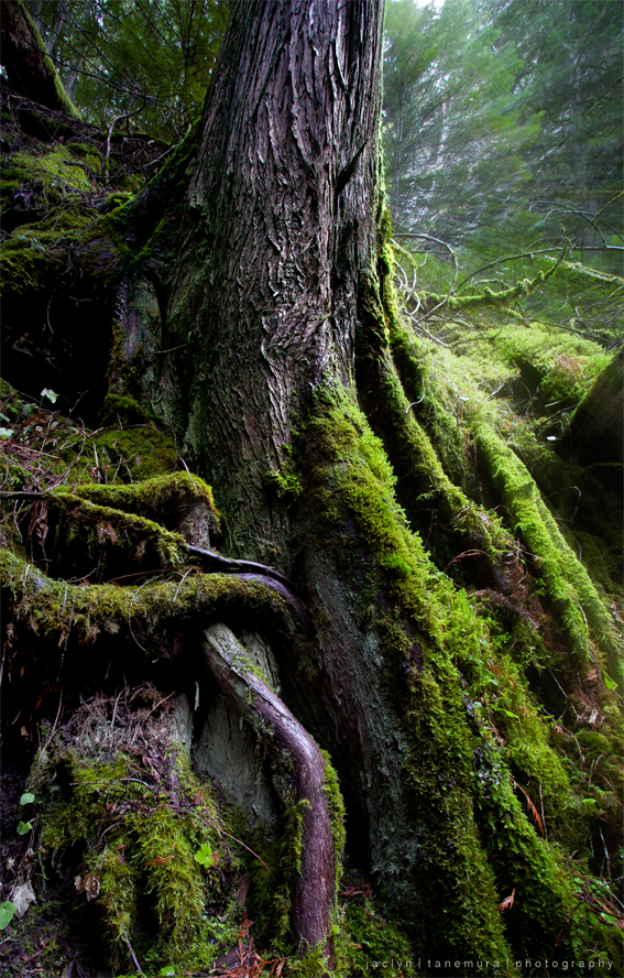 The Roots of Fangorn by jaelise