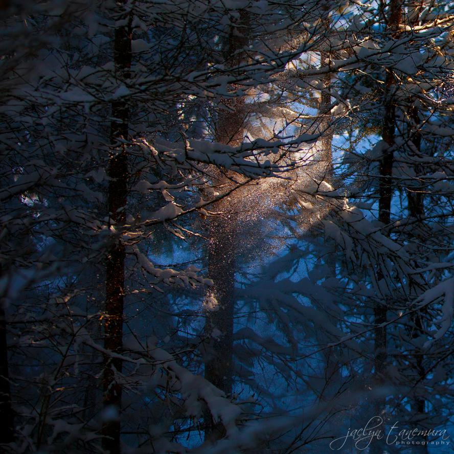 Fairy Dust by jaelise