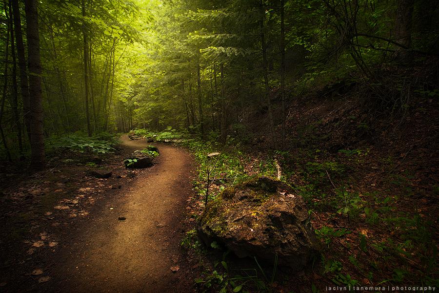 Wander by jaelise