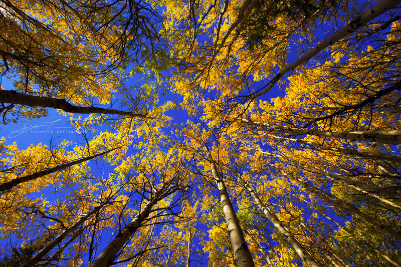 Autumn Alight by jaelise