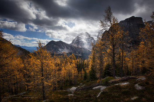 glowing larches