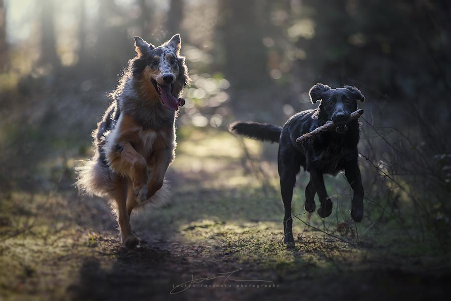 fast friends by jaelise