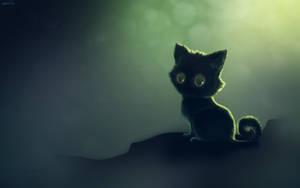Kitten by JWSnavely