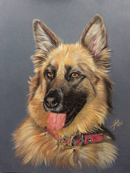 Pastel pencil drawing of a dog