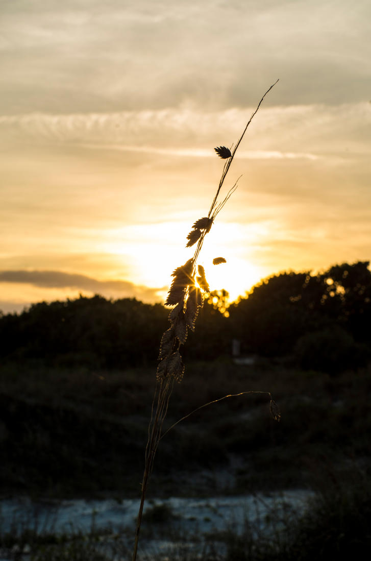 Sea Oat Sunset by nwo