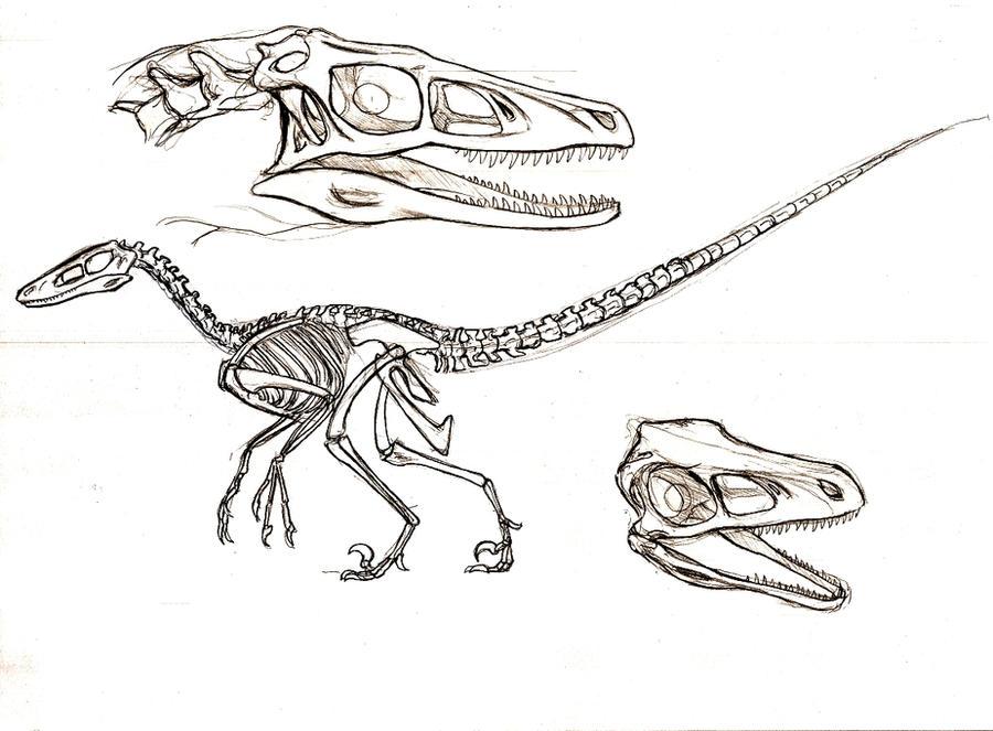Dinosaur skull anatomy