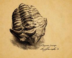 Calymene breviceps by Telera1701