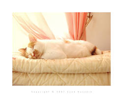 Cat 7 by eyadness