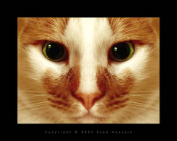 Cat 10 by eyadness