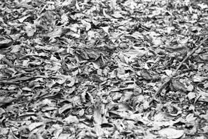 Leaf Litter by ShannonIWalters