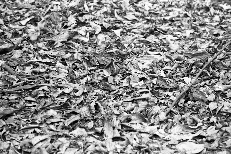 Leaf Litter by ShannonIWalters