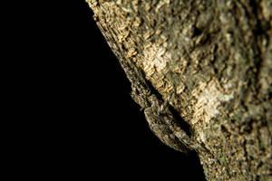 Bark Huntsman by ShannonIWalters