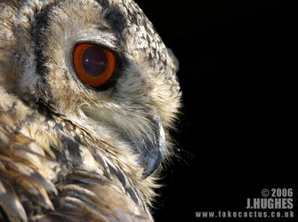 Owl by carpetmankent