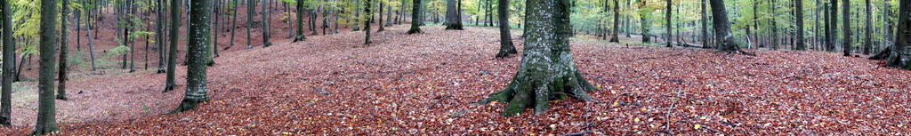 Fallen leaves carpet