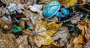 Verdigris agaric from Breazu Forest by EnacheArmand