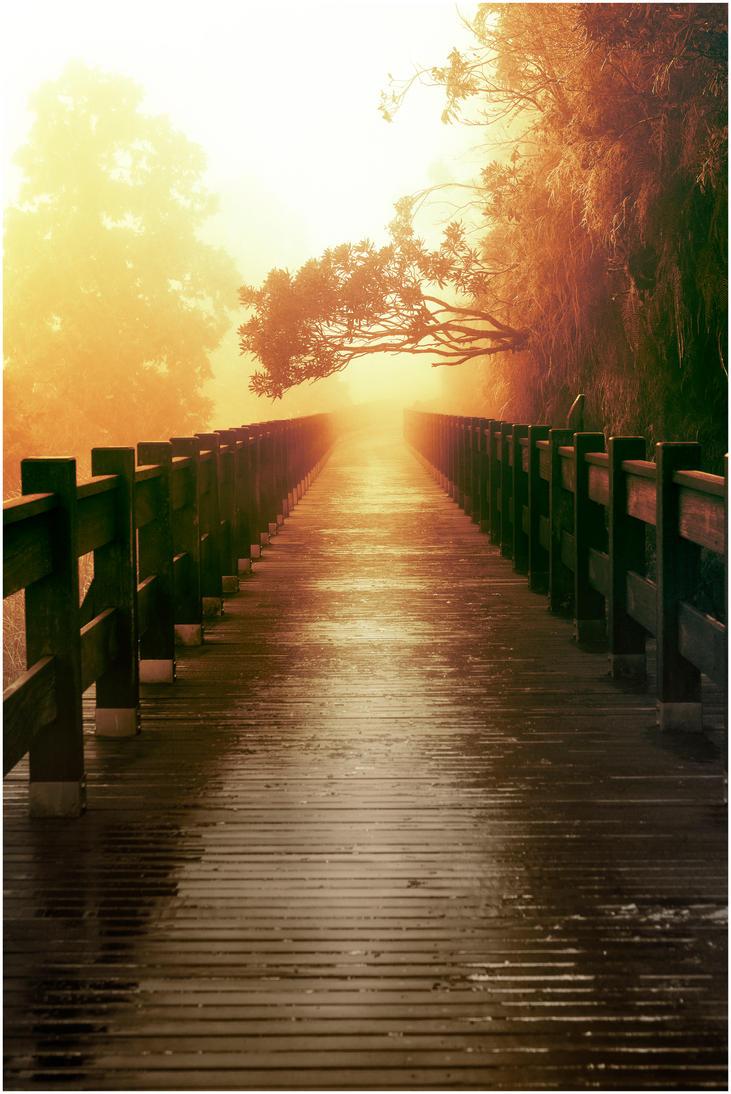 Misty Yilan Morning by tmz99