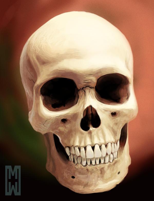 Skull Study by SchneeKatze09